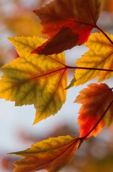秋叶那样美,谁还来看花