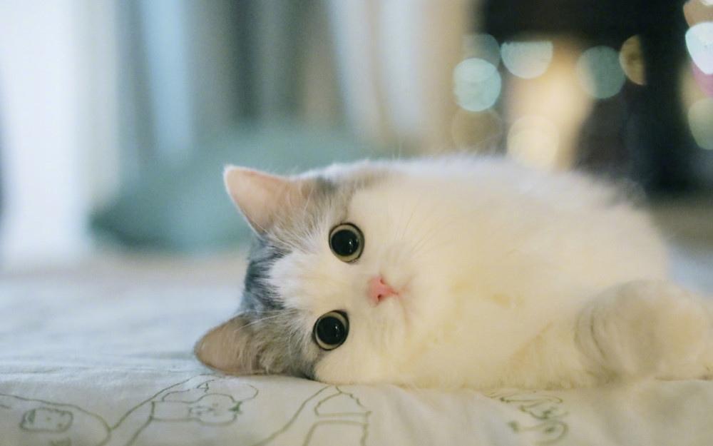 超漂亮的小猫咪