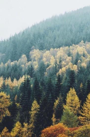 清新养眼迷人秋景风光