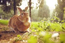 超可爱的兔子