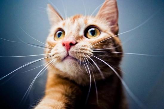 表情丰富的可爱小猫咪