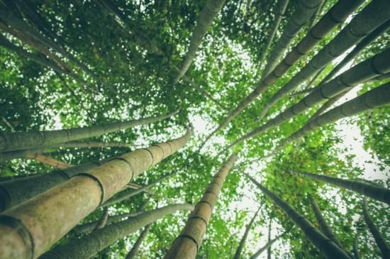 安静优美的竹林唯美美景