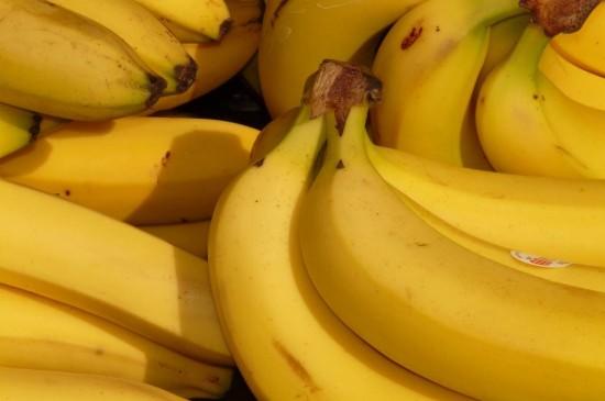 香蕉是芭蕉科芭蕉属植物