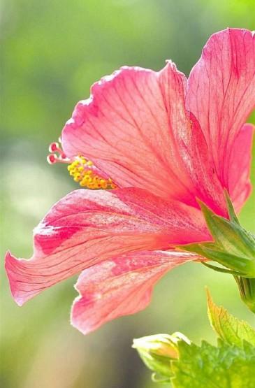 鲜艳欲滴春天花朵