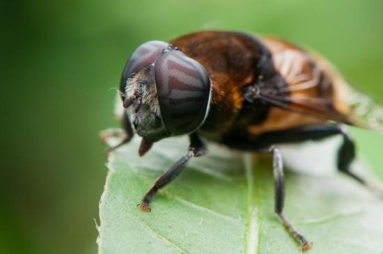 勤劳的蜜蜂高清图片