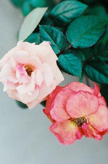 唯美花卉合集