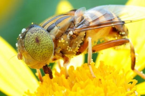 花蕊上的蜜蜂