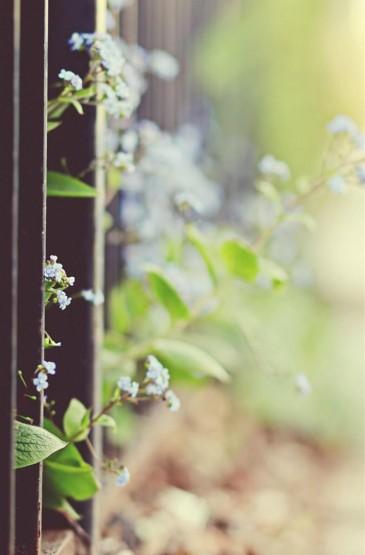 小清新绿色植物iPhone6s Plus壁纸