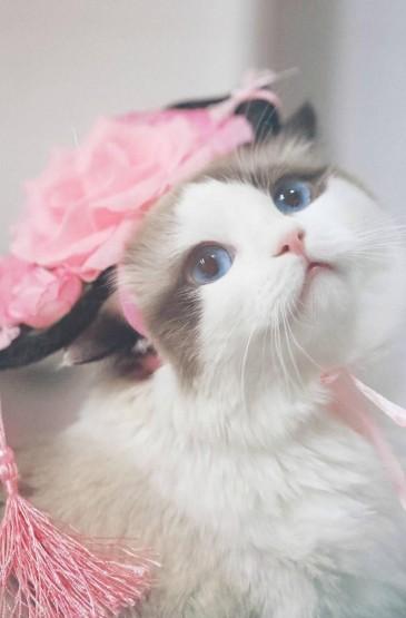 萌萌哒猫咪cosplay