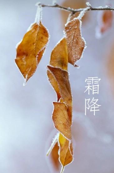 霜降来,冬将至
