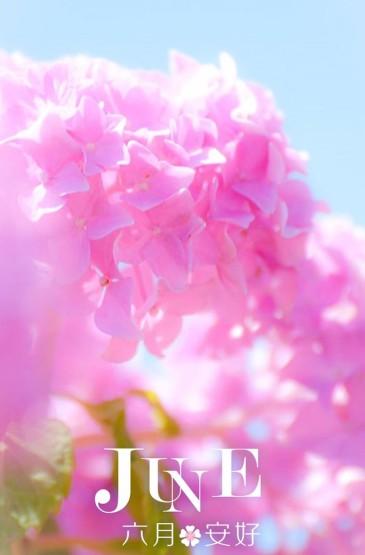 六月的花儿